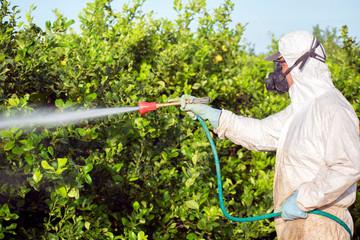 Worker fumigating plantation of lemon trees in Spain