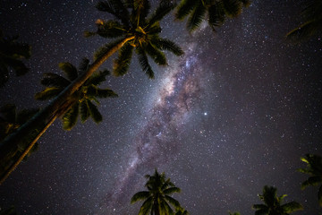 Starry night above Palm trees on the tropical island of Samoa