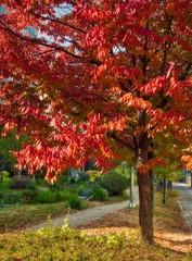 Maple tree at Mindongsan Arboretum in Cheongju city, Korea