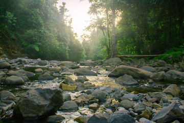 nature indonesia forest with river