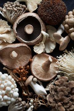 Assortment of Various Edible Fresh Raw Mushrooms