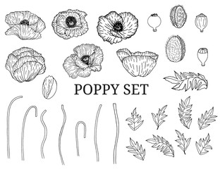 Decorative vector black poppy flowers and leaves in hand draw sketch style, design element. Floral decoration for invitations, greeting cards, banners.