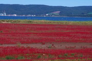 Papiers peints Bordeaux 真っ赤に染まったアッケシソウ