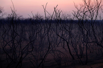 Charred trees are pictured at the Nembi Guasu conservation area in Charagua