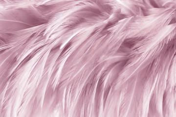 Foto op Aluminium Flamingo closeup feathers line texture background