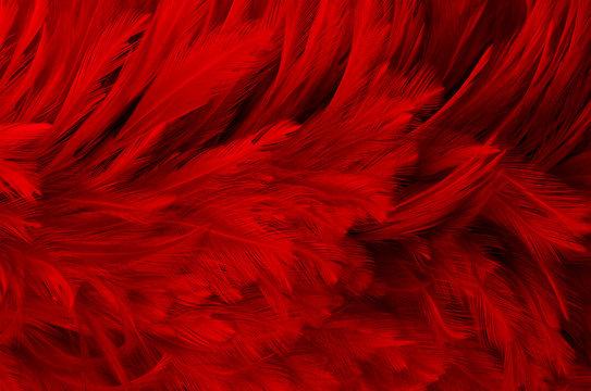 dark red feathers background