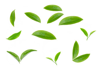 green tea leaf isolated on white background Wall mural