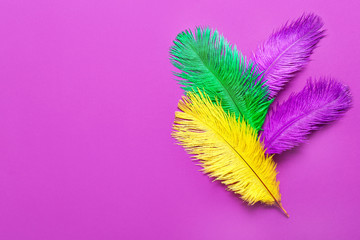 Colorful feathers on color background