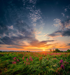 Beautiful sun set landscape with a wild field full of purple flowers and green grass. Sunset cloudy sky above meadow.pe.