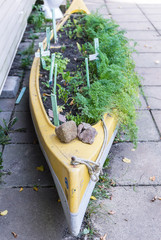 Old canoe reused as a herb garden. Shallow depth of field.