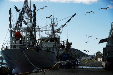 Fishing vessels are pictured at fish market in Ofunato