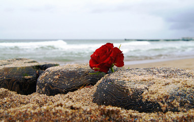 Funeral flower, lonely red rose flower at the beach, water background with copy space, burial at see. Empty place for a text. Funeral symbol and Condolence card concept Wall mural