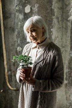 senior woman looking at small plant in pot in empty room