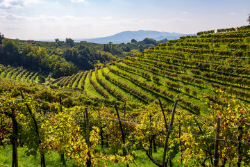 Vineyards in Valdobbiadene Fototapete