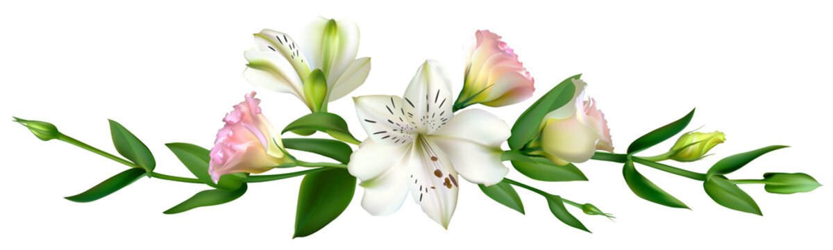 13,817 BEST Lily Border IMAGES, STOCK PHOTOS & VECTORS | Adobe Stock