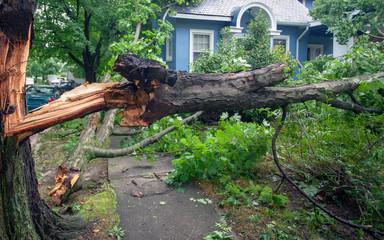 Fallen tree hurricane tornado storm devastation.