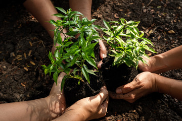 Hands Team work protecting sapling tree growing up and planting on land for reduce global warming earth, top view. Agriculture Ecology Concept