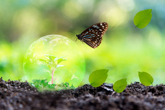Glowing earth globe on soil with butterfly in the nature. World Environment and Save Economy. Earth image provided by Nasa.