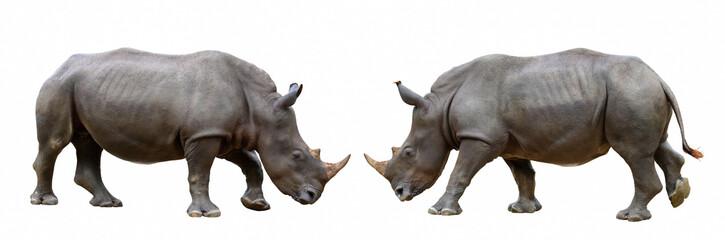 Foto op Aluminium Neushoorn Rhinoceros isolated on white background.