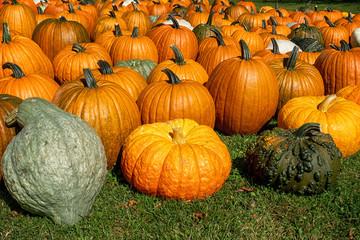 An abundance of pumpkins and gourds.