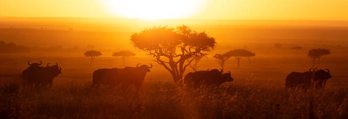 Zelfklevend Fotobehang Afrika Masai Mara Buffalo Sunrise