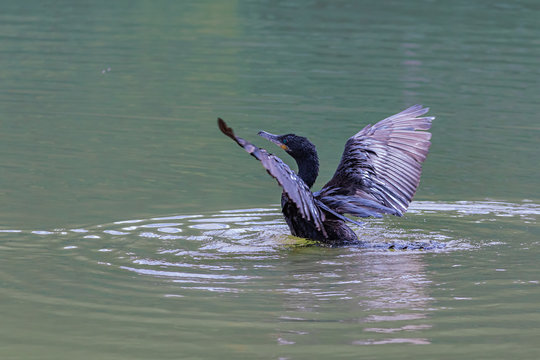 A lone cormorant drying its wings