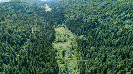 Zelfklevend Fotobehang Olijf Vertical aerial view of spruce and fir forest (trees) and meadow, Slovenia.