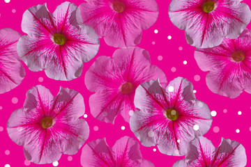 Petunias. Seamless floral pattern on a pink background.