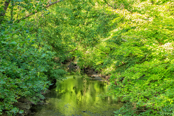 Creek in a Wooded Park