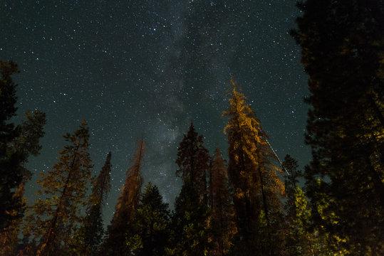 Milky Way between Firns in Yosemite National Park