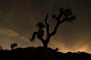 Starry Night in the Joshua Tree NP