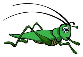 Grasshopper, illustration, vector on white background.