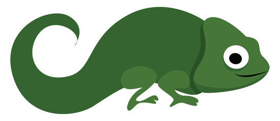 Green chameleon, illustration, vector on white background.