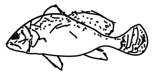 Fish drawing, illustration, vector on white background.