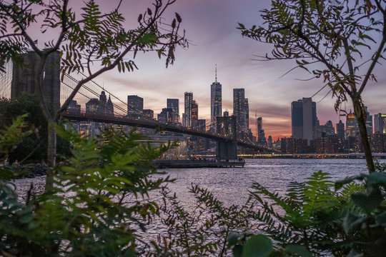 A view of New York City through the trees in Brooklyn