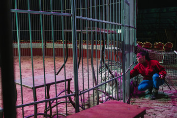 Woman caressing tigers behind cage
