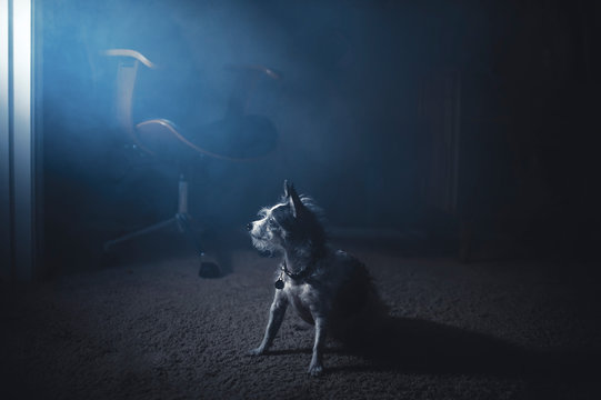A small terrier dog in foggy light