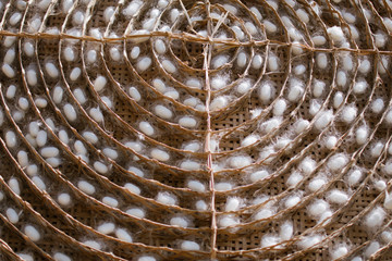 Silk worm cocoons in bamboo basket