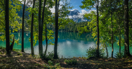 Wall Mural - green trees on the shores of the Alpine lake