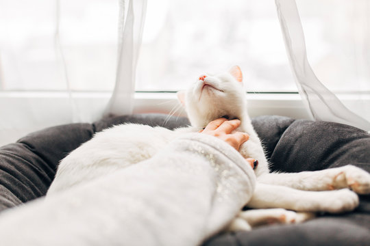 Woman pampering her cat at home