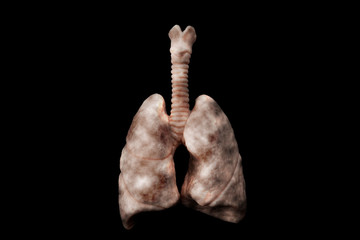 Cigarettes harm your health, lung cancer, no smoking and nicotine addiction concept theme with diseased lungs inhaling cancerous smoke on black background with a clip path cutout