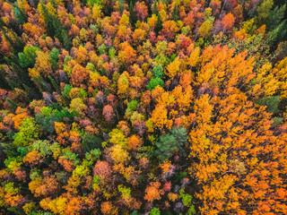 Fototapeta premium Piękny jesienny las z żółtymi i czerwonymi drzewami, widok z lotu ptaka