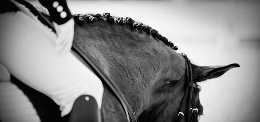 Not color image of the pigtails on neck sports horse. Equestrian sport.