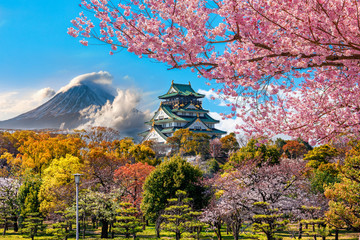 In de dag Kersenbloesem Osaka Castle and full cherry blossom, with Fuji mountain background, Japan.