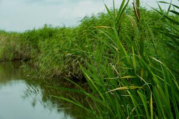 水面に芦が映る風景の縦長写真