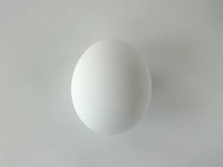 Single White Egg Against White Background