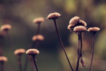 Photo sur Plexiglas Macro photographie Dry, fallen flowers in autumn close-up