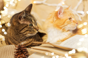 Fototapete - pets, christmas and hygge concept - two cats lying on sofa with book at home in winter