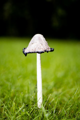 mushrooms found in the garden