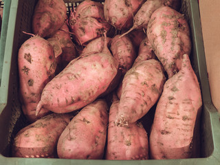 Sweet potatoes with soil in a harvest box